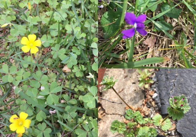 collage of different types of weeds