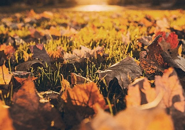 fall leaves on the grass with the sun shining on them