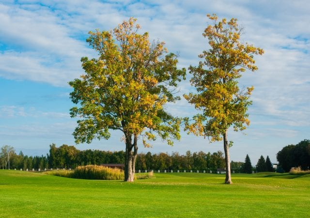 beautiful sunny day and trees at the golf course