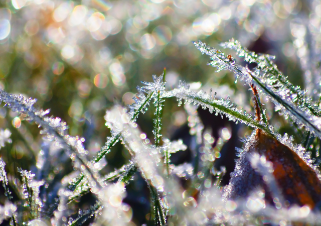 close up of frosty grass