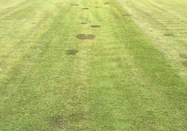 multiple Spring Dead Spots on grass