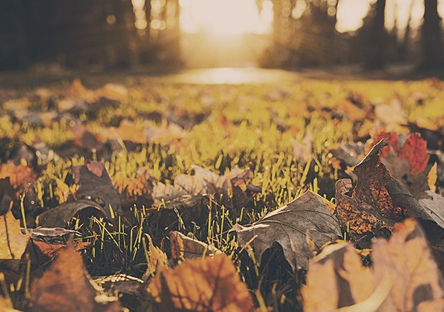 autumn leaves on grass with sun shining