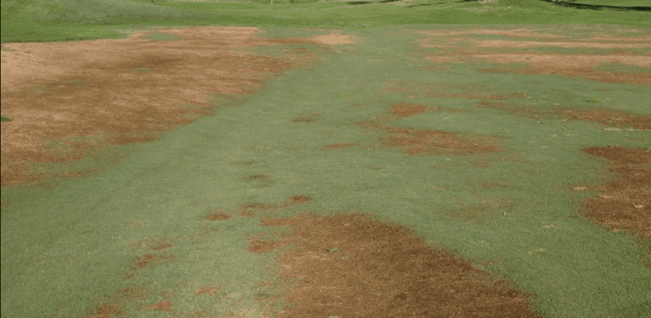 golf course with brown grass