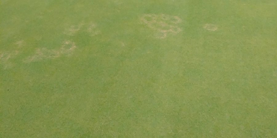 mini ring on golf course grass