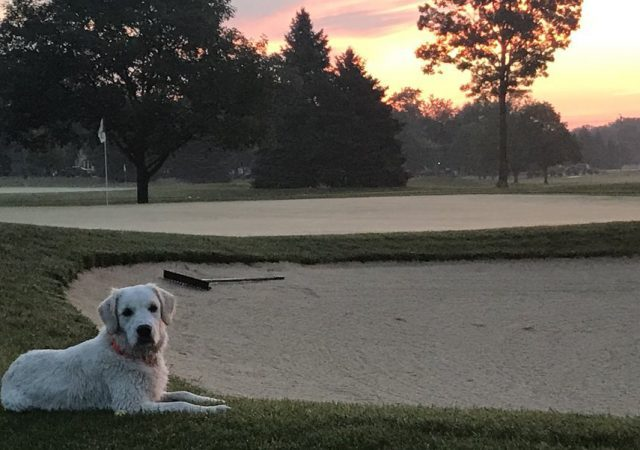 dog sitting on golf course