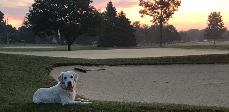 dog sitting on golf course