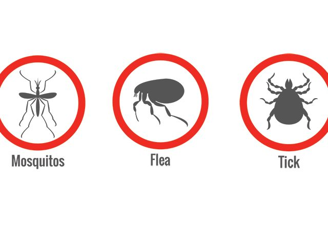 Mosquitos, Fleas, and Ticks