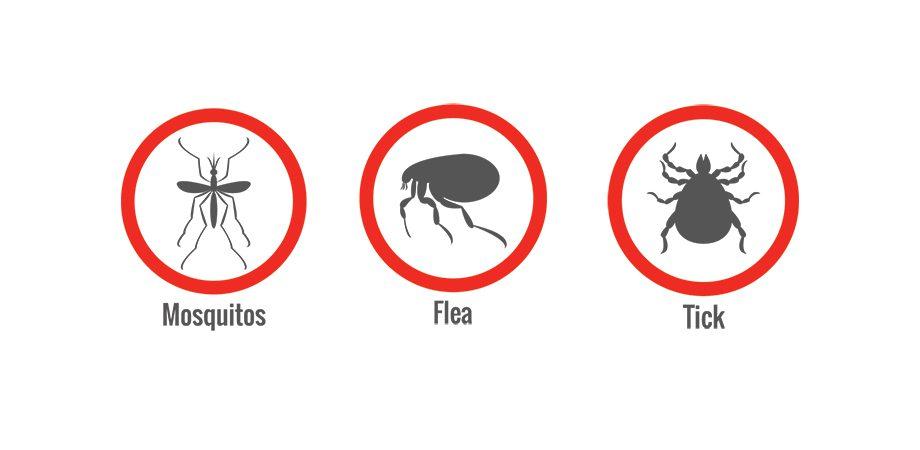 Mosquitos, Fleas, and Ticks