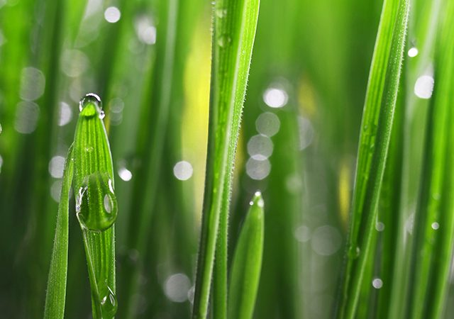 close up of grass with water on them