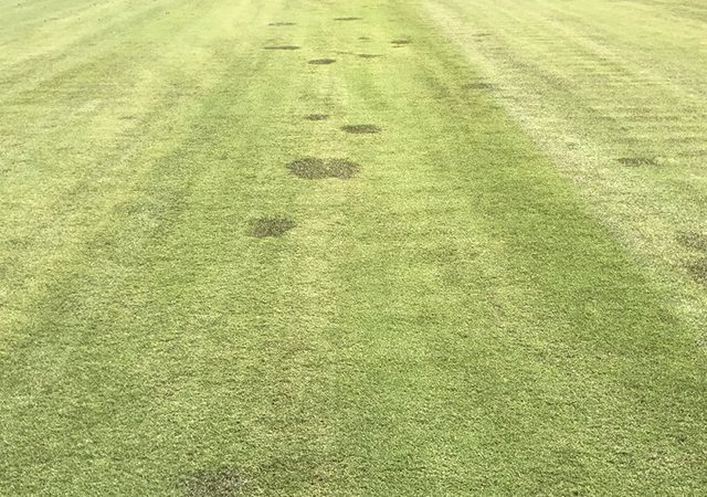 close up of grass with dark patches