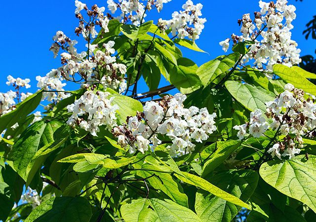 white flowers and green leaves
