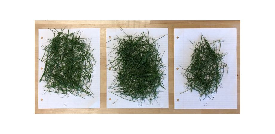three different grass samples