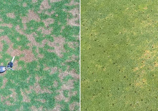 dollarspot_anthracnose