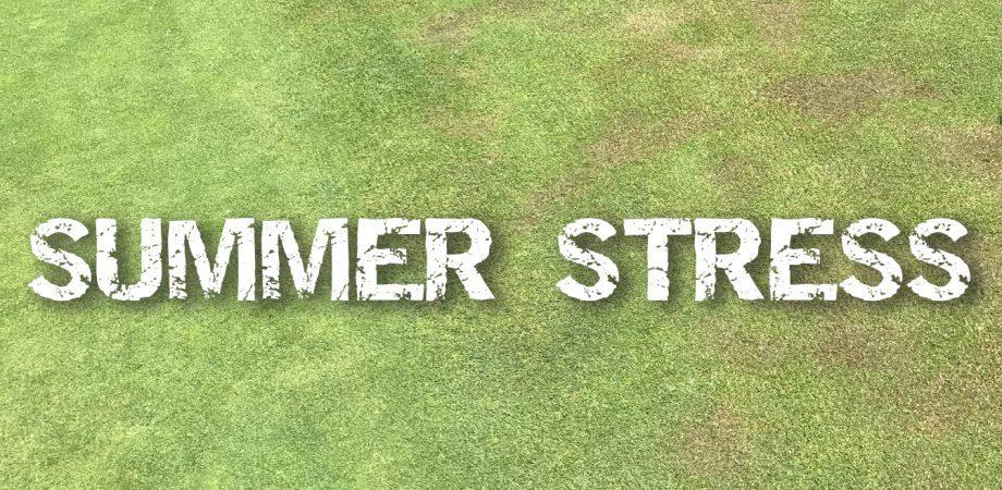 Summer Stress
