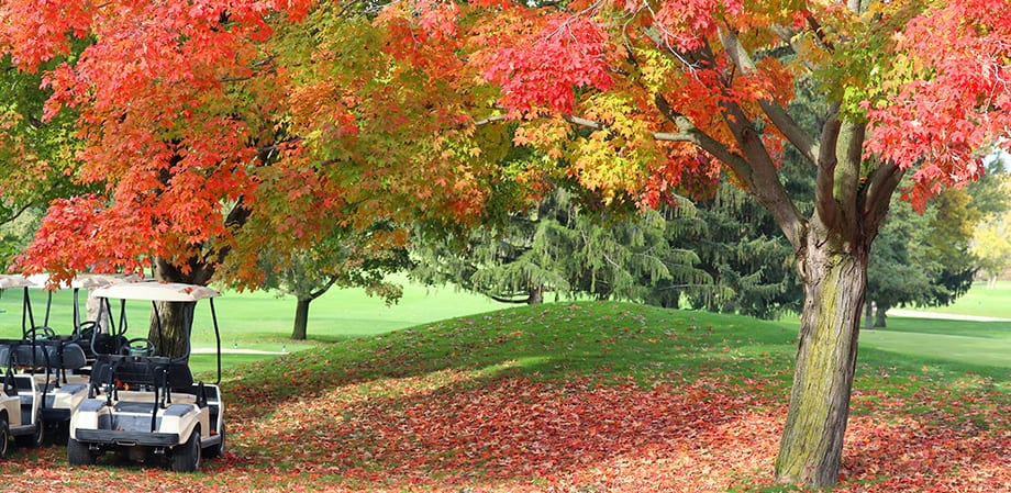 fall trees on golf course