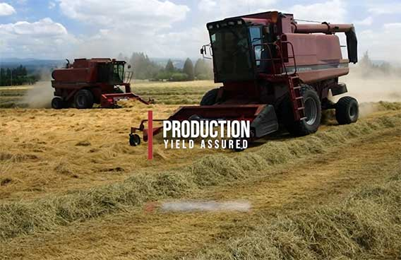 production yield assured