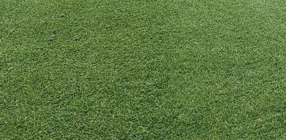 Zoysia Grass Blog