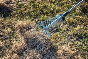 Lawn being dethatched by a metal rake