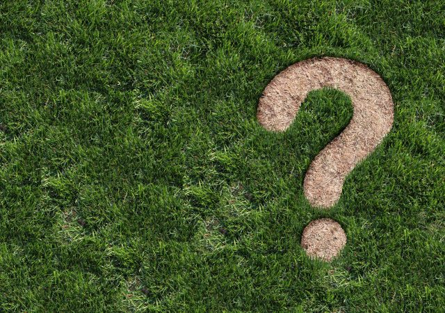Birdseye view of a patch of grass containing a brown spot in the shape of a question mark