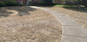 Brown lawn with a sidewalk running through it