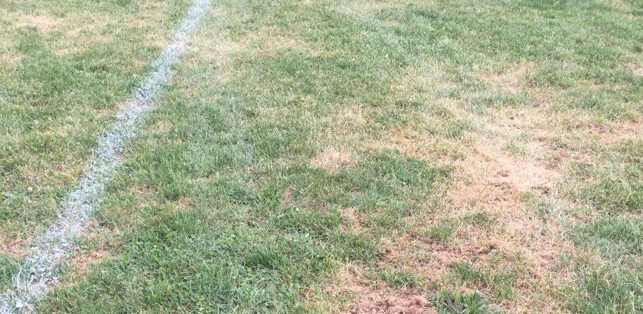 Grub damage to a grass field